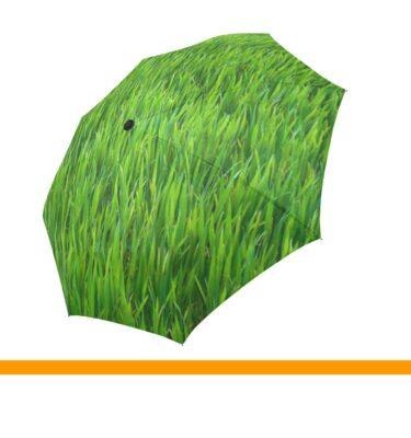 umbrella grass3